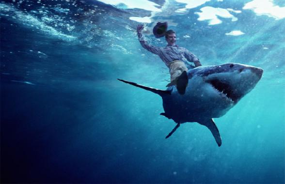 Du rodeo sur requin - shark rodeo